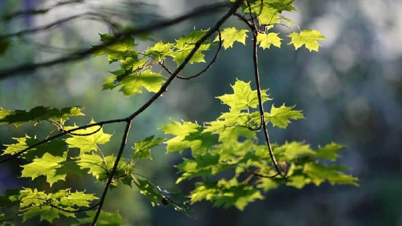 Etälenkkeillen hyvinvointia luonnosta